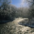 Stock Photo: Frosted Trees Along Stream