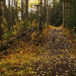 Stock Photo: Pathway Through Woods