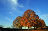 Bäume im herbst — Stockfoto