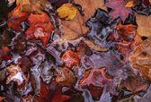 Hojas de otoño flotando en el agua — Foto de Stock