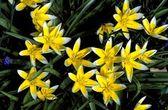 Yellow Spring Flowers — Stock Photo