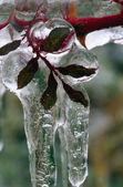 Leaves Under Ice — Foto de Stock