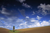 Lone Tree In Field — Stock Photo