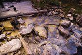 Stream With Fallen Tree — Stock Photo