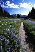 Prachtige wilde bloemen in een grasrijke weide — Stockfoto