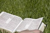 Bible Lying On The Grass — Stock Photo