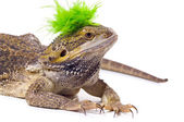 Bearded Dragon Lizard With Mohawk — Stock Photo