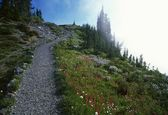 Trail In Fog At Mount Rainier — Stock Photo