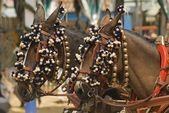 Decorated Horses — Stok fotoğraf