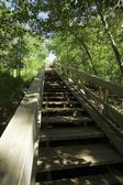 Stairway Through Trees — Stock Photo