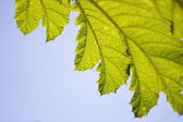 Close-Up Of A Leaf Against The Sky — Photo