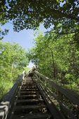 Stairway Through Trees — Stock Photo