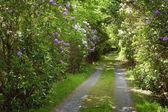 Road Through Trees, Ireland — Stock Photo