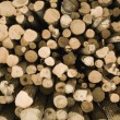 Piled Logs — Stock Photo #31720019