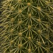 Cactus Close-Up — Stock Photo #31720261
