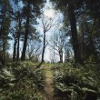 Path In A Forest — Stock Photo