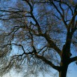 Tree And Sky — Stock Photo #31720469