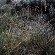Dew-Covered Orb Web — Stock Photo #31720629