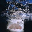 Stock Photo: Shark Jaws And Teeth