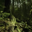 Stock Photo: Moss In Rain Forest