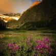 Stock Photo: Mountain And Meadow Scene