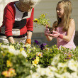 Stock Photo: Grandmother And Granddaughter Gardening