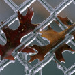 Leaves On Frozen Fence — Stock Photo