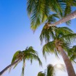 Palm Trees — Stock Photo #31722071