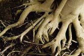 Trädstam — Stockfoto