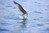 Bird Fishing — Stock Photo