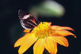 Motýl na květině — Stock fotografie