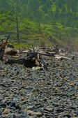 Rocky Beach And Forest — Foto de Stock