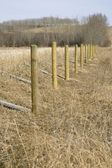 Rural Fence Posts — Stock Photo