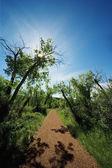 Percorso e alberi — Foto Stock