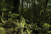 Moss In Rain Forest — Stockfoto