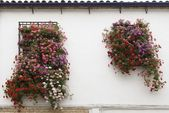 Baskets Of Hanging Flowers — Stock Photo