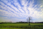 Lone Tree With Clouds — Stock Photo