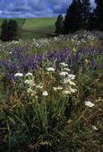 Field Of Blooming Flowers — Stockfoto