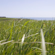 Stock Photo: Grass, Pastoral Field, Copper Coast, Co Waterford, Ireland