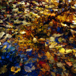 Stock Photo: Leaves In Water Puddle