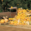 Pumpkin, Gourd And Squash Harvest Display — Stock Photo