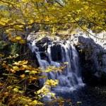 Small Waterfall Among Trees — Stock Photo