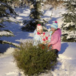 Children Pulling Tree — Stock Photo #31754673