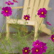 Stock Photo: Flowers In Backyard
