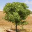 Stock Photo: Disused Wheelbarrow Under Tree