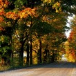 Stock Photo: Tree-Lined Road