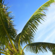 Palm Tree — Stockfoto #31758423