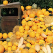 An Old Truck Surrounded By Pumpkins And Squash — Stock Photo