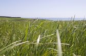 Grass, Pastoral Field, Copper Coast, Co Waterford, Ireland — Stock Photo