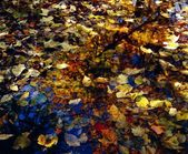 Leaves In Water Puddle — Stock Photo